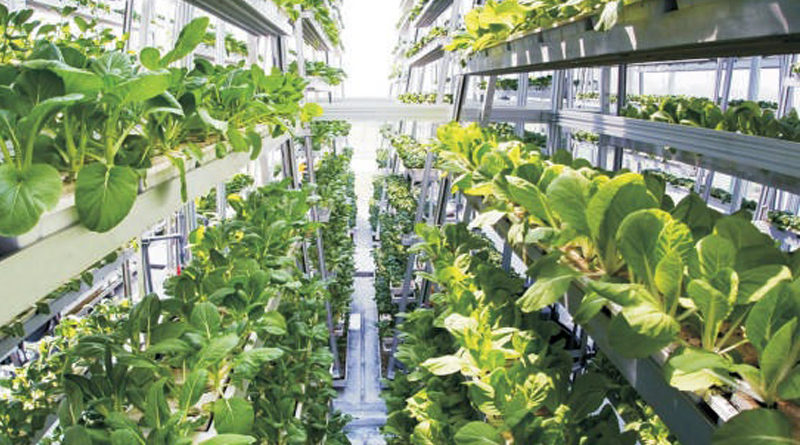 Vertical Farming: Future Farming