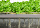 HYDROPONICS- A TECHNIQUE OF GARDENING WITHOUT SOIL