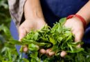 Organic Agriculture: Sustainable Food Security For Nation